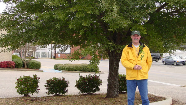 Arborist Herschel Hale talks about this Live Oak, the offspring of the Treaty Oak in Selma. (Contributed)