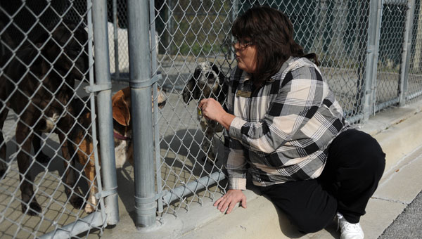 Executive Director Sara Shirley plays with some of the dogs awaiting a forever home. (Reporter photos/Jon Goering)