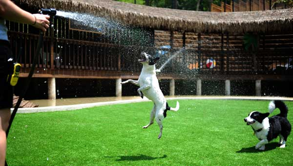 Dogs in the large dog daycare area of the newly opened Cahaba Beach Dog Park in Inverness get a splash of cool water on a warm afternoon. (Reporter Photo/Jon Goering)