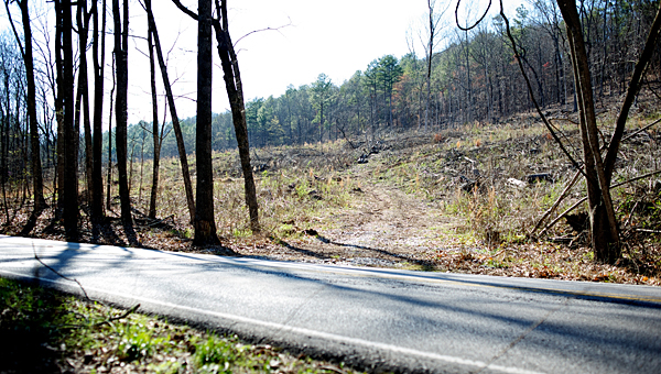 Pelham has no immediate plans to do away with the tree tunnel on State Park Road, Mayor Gary Waters said during a Nov. 19 town hall meeting. (File)