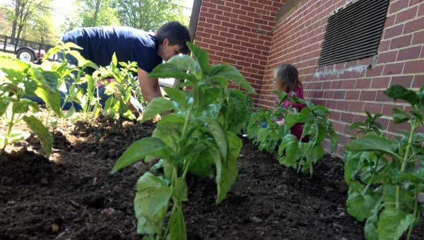 Vincent Elementary has partnered with Taziki's owner Keith Richards to launch HOPE – Herbs Offering Personal Enrichment. (Contributed.)