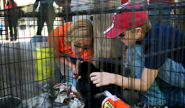 Ruth and Kyle Searchfield, Alabaster, admire a dog from the Shelby County Humane Society during a past SCHS event (Reporter Photo/Jon Goering)