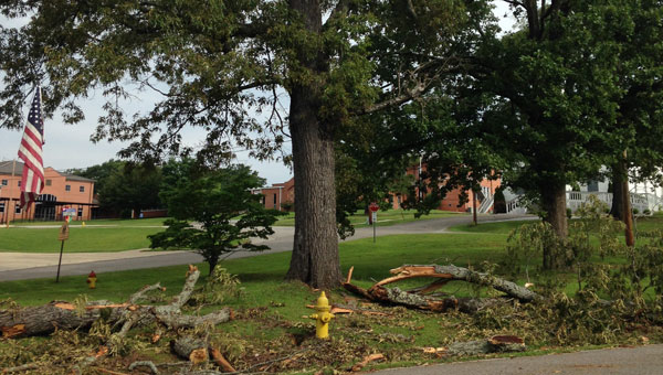 A June 7 storm downed trees and caused power outages in Wilsonville. (Contributed)