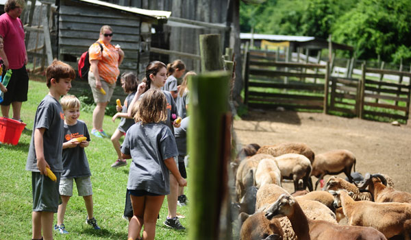 Campers feed farm animals at Summer Days on the Farm (Reporter Photo/Ginny Cooper McCarley)