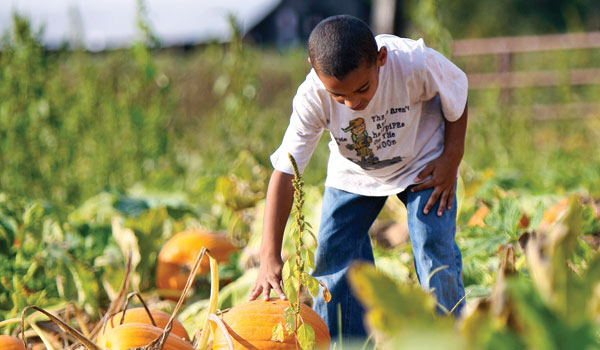 During Fall Harvest Hours, kids can pick pumpkins and participate in a variety of other activities. (File)