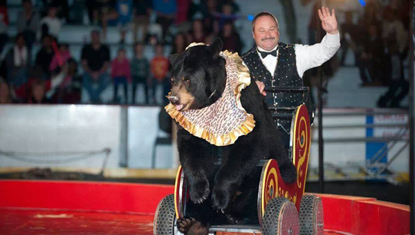 The Zamora Shrine Circus will feature bears, elephants, acrobats and clowns. It will be hosted at the Pelham Civic Complex and Ice Arena on Nov. 14-16. (Contributed)