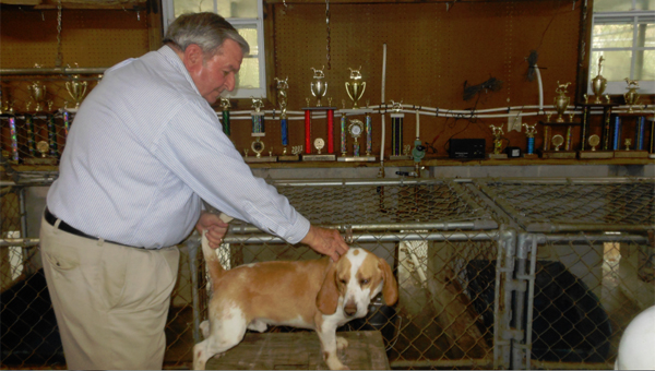 Larry Dillard, shown here in his trophy room with one of his dogs, Albus, has been raising and training beagles to hunt and compete in field trials since he was five years old. (Contributed)