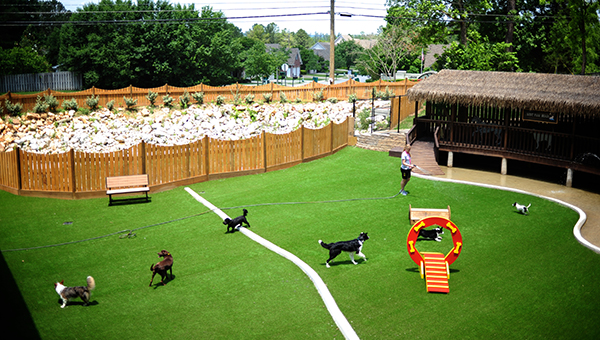 The city of Helena is looking at new locations to place a proposed dog park and adoption center for residents to use. (File)