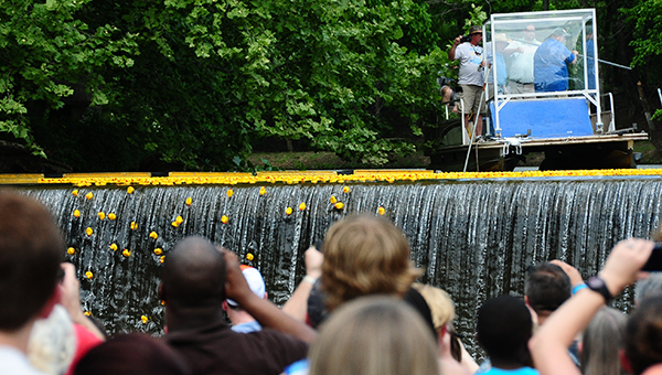 Those who attended the Buck Creek Festival snapped many photos and videos of the famous duck race that took place on Saturday, May 9 at 3 p.m. (Reporter Photo/Graham Brooks)