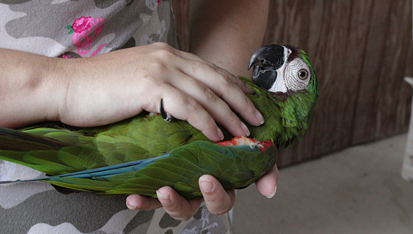 Parrots of Pelham focuses on helping local bird owners. (Contributed)