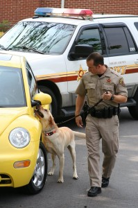 Bedsole trains his former K-9 officer, Chase. (Contributed)