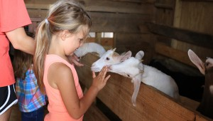 Stone Hollow Farmstead is home to chickens, ducks, horses and goats. Kids got to visit the baby goats on May 29 tour. (Special to the Reporter / Dawn Harrison)