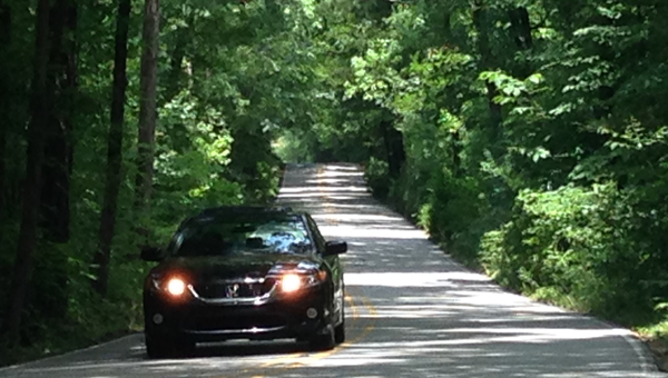 """The initial design work has begun on Oak Mountain State Park's road improvement project at the """"tree tunnel."""" (Contributed)"""
