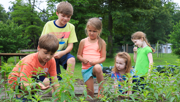 Kids explore the raised bed garden at Stone Hollow Farmstead during a visit and tour on May 29. (Special to the Reporter / Dawn Harrison)