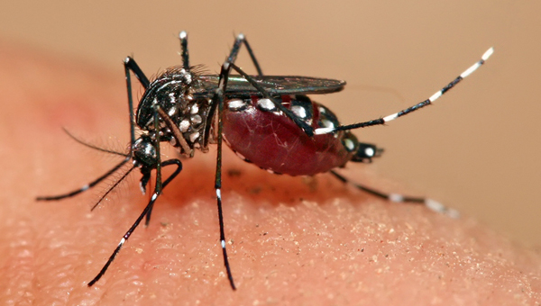 The Alabama Department of Public Health's latest report says 25 Alabama residents have tested positive for the Zika virus from 16 counties as of Aug. 15, including Shelby County. (File)