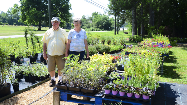 Don and Ruth Driggers, owners of Vincent Gardens and Southern Roots and Blooms, walk through rows of plants at their Columbiana location. The couple opened their first garden shop in Vincent nearly seven years ago. (Reporter Photo/Emily Sparacino)