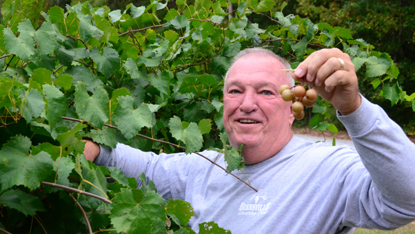 Columbiana Mayor Stancil Handley was the honorary master of the harvest at Lewis Lakes Vineyard on Saturday, Sept. 17. The vineyard started in 2007 and has been open to the public since 2013. (Reporter photo/Alec Etheredge)