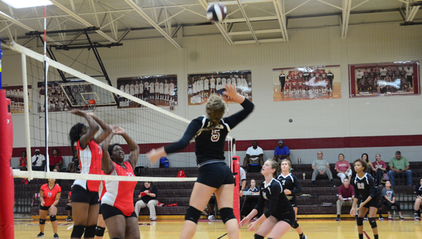 The Shelby County Wildcats' volleyball team is off to a 12-2 start on their season and look to continue their success with a tough slate of matches ahead. (Reporter photo/Alec Etheredge)