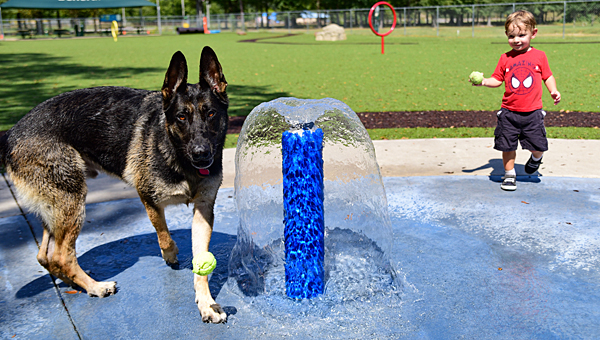 A German shepherd named Caliber enjoys an afternoon on the doggy splash pad at Alabaster's Beneful Dream Dog Park with his new friend John Blacknall Jr. (Reporter Photo/Keith McCoy)