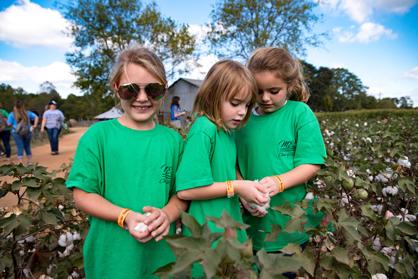 Bristol Hannah, Kalyn Ervin and Kaytlynn Barron pick cotton at Old Baker Farm.