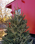 A Christmas tree located at the Caboose in Old Town Helena is in need of Christmas decorations from the community. (Contributed)