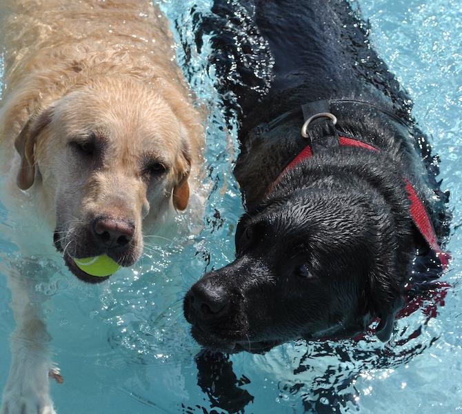 Ymca Pelham Al: Pelham YMCA Hosts Doggy Dip Day